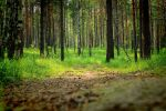 Forest track by Gladhnes
