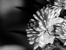white flower by ohshrubbery