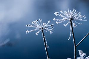 beauties of winter ii by riskonelook