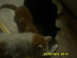 My cats pigging out by Cyanideinmyveins