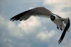 Seagulls 01 by dylanmeadows