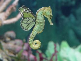 Butter horsefly - seahorse by ObliVioN99