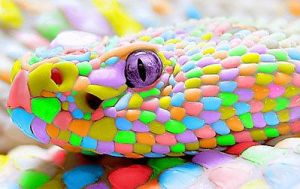 Candy Snake by kenzeec