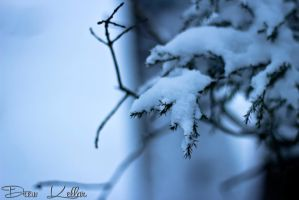 Let It Snow by pureoptic