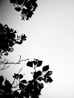 branch by ukhan50699