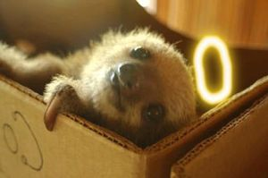 Angelically Cute Baby Sloth by The-Original-Moo-DOg