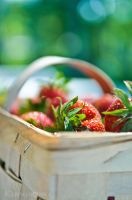 Strawberry days... by karolinanna