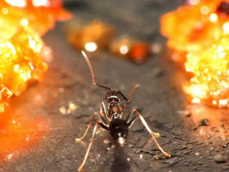 Gold-Digging Ant by mutmut