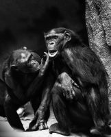 Monkey Love by Danwarner