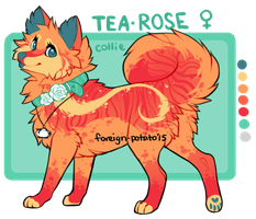 Tearose ref by foreign-potato