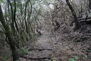 La Gomera forest by Ieris-Stock