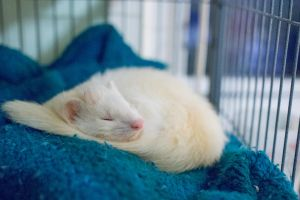 Good morning, Mr Ferret by elvaniel