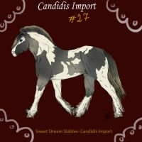 Candidis Import #27- SOLD by SweetStreamStables