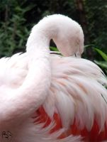 Flamingo Grooming by FiatLupi