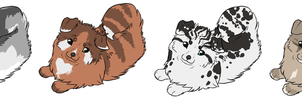 Pomsky Adopts CLOSED by Aspenture