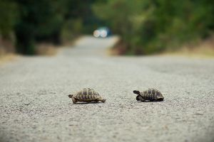 Run turtle, run for your life by mario19