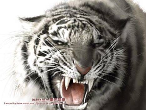 Chinese Tiger by heise