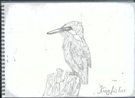 Kingfisher - Not coloured by NicolaMichelle