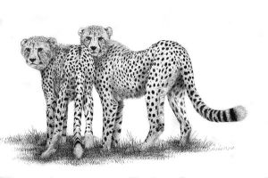 Cheetahs by Rens-Ink