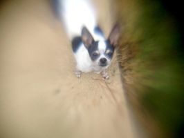 Lensbaby iPhoneography XXXV by LDFranklin