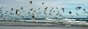Gull panorama 1 by wildplaces