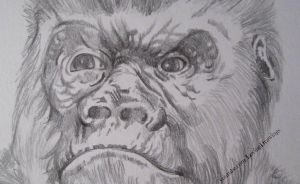 The angry face of a gorilla by LovingDrawings