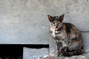 Feral Cat of Fredericksburg by imagesbysasha