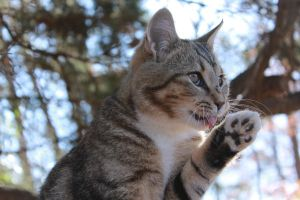 Lickin' my Paw by come2life