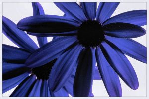 Persia by aquapell