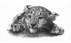 Snow Leopard Cub by WaveGlistening