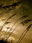 Late Summer Breeze by mollykubes539