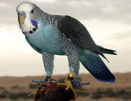Super-Budgie by LadyDeuce