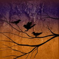 Sunset birds by RedRowanDesigns