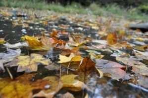 Leaves in water by MireInHypocrisy