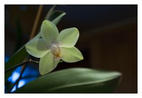 Orchidee_02 by Tain0s