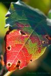 Colors of Fall by acutely