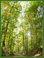 Green canopy. L1040386, with story by harrietsfriend