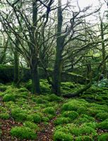 Forest_moss_trees_2 by GoblinStock