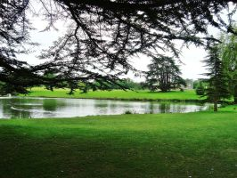 Leeds Castle's park by Niquesse