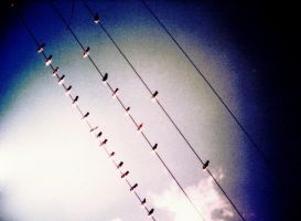 its a birds life by wonderous