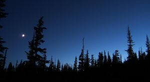 Dusk in the Mountain Forest by MandarinManMark