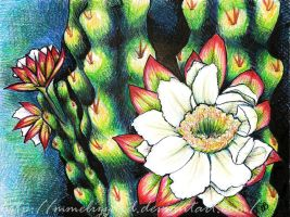 Cactus Flower by MmeLizzard
