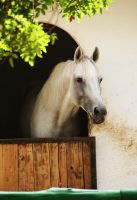 Le cheval blanc by EleaLaFleur
