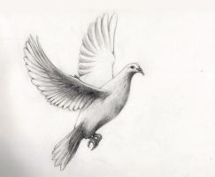 Realistic dove drawings