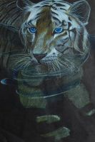 Tiger by frene