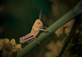 Differential Grasshopper by boron