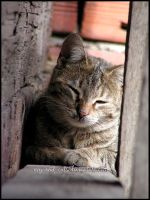 478 by evy-and-cats