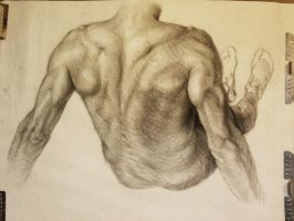Study of Triceps Brachii by WoodyLWG