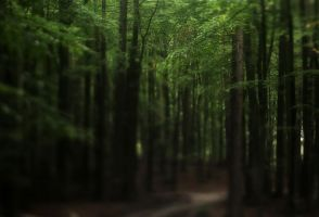 lensbaby forest by ForrestBump