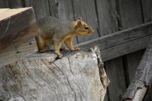 fairytale-how to squirrel bread proverb-serial2 by sonafoitova